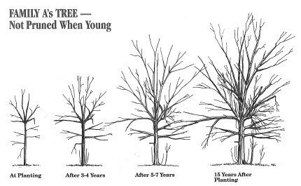 Unhealthy Tree Failure Occurs Without Structural Pruning