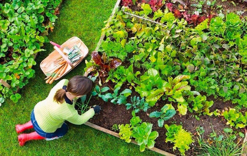 Garden_vegetable_aerial_gardener.jpg