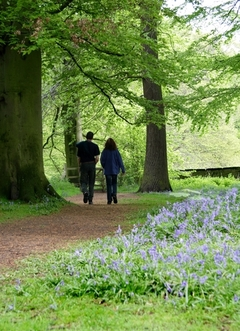 Healthcare_Garden_Design_couple_walking_woods.jpg