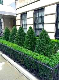 City Garden Topiary