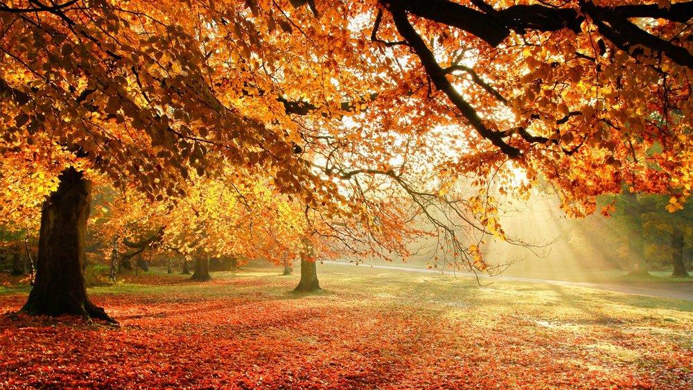 Trees sunny fall foliage lawn drive.jpg