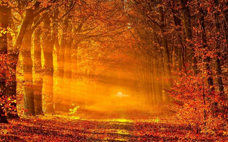 Autumn Beech Allee Sunset Couple Walking.jpg