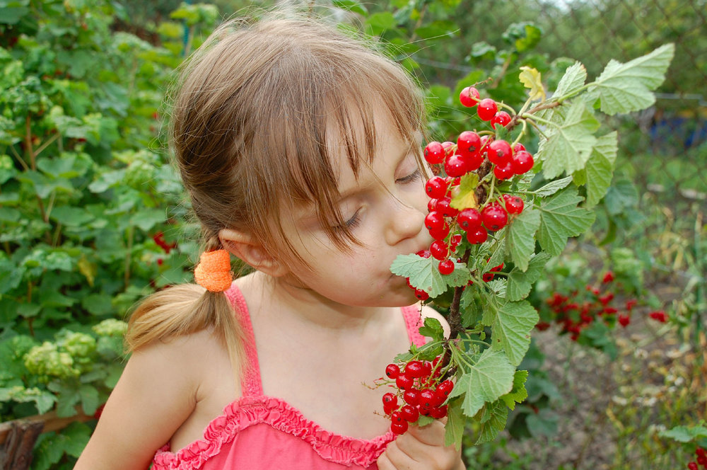 Young Gardener Enjoying Fragrance Of Vibrant Fruit Set