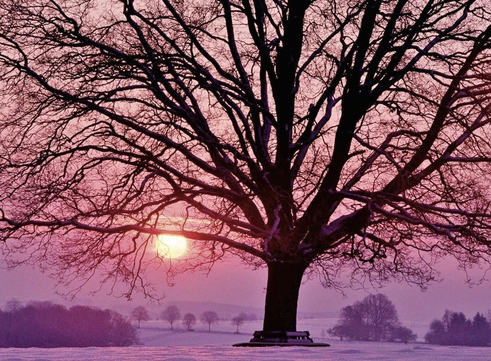 Oak Tree Winter Fields Snow Sunset.JPG
