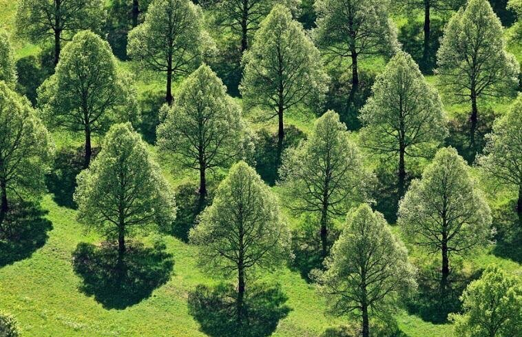 Tree_nursery_field_aerial.jpg