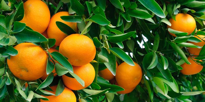 fctg-citrus.jpg