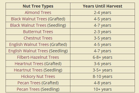 https://www.starkbros.com/growing-guide/article/nut-trees-how-many-years-until-harvest
