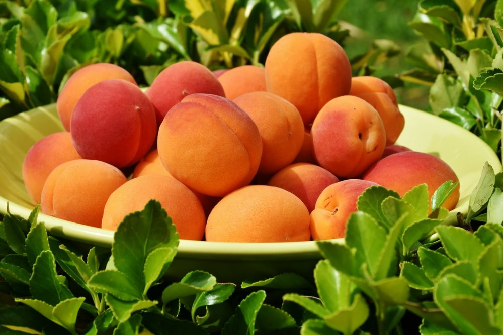 apricots_apricot_fruit_fruits_sweet_healthy_delicious_eat-572948.jpg
