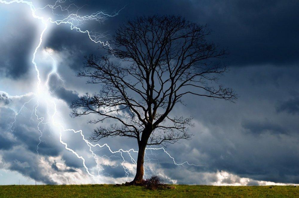 tree_storm_sky_lightning_rain_weather_nature_danger-1023510.jpg