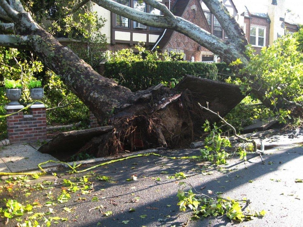 tree_uprooted_tornado_winds_damage_storm_disaster_fallen-1359240.jpg