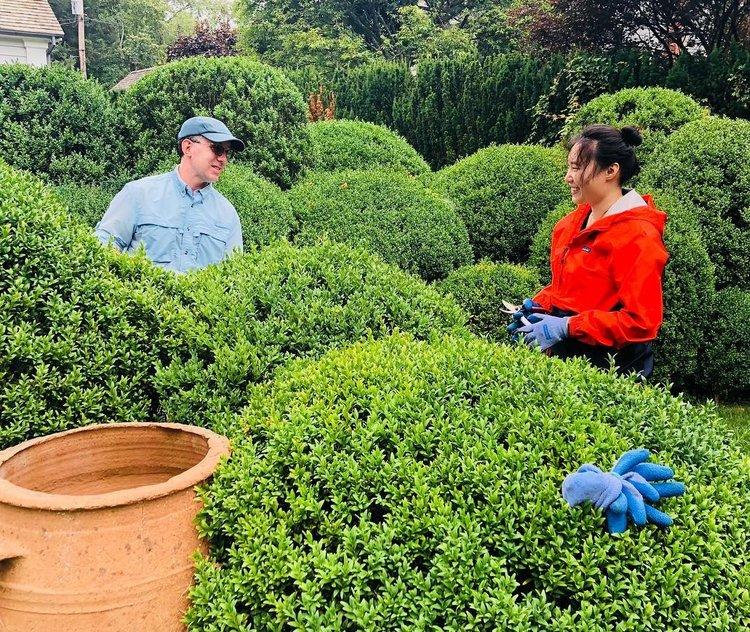 Boxwood Prune | King Garden Designs