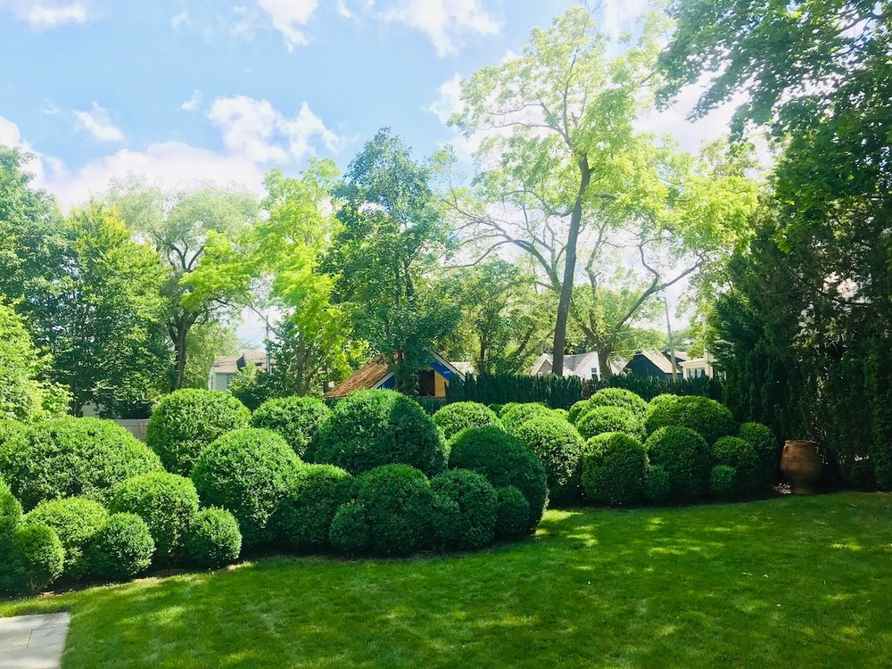 Boxwood_Cloud_Pruning_View_South.jpeg