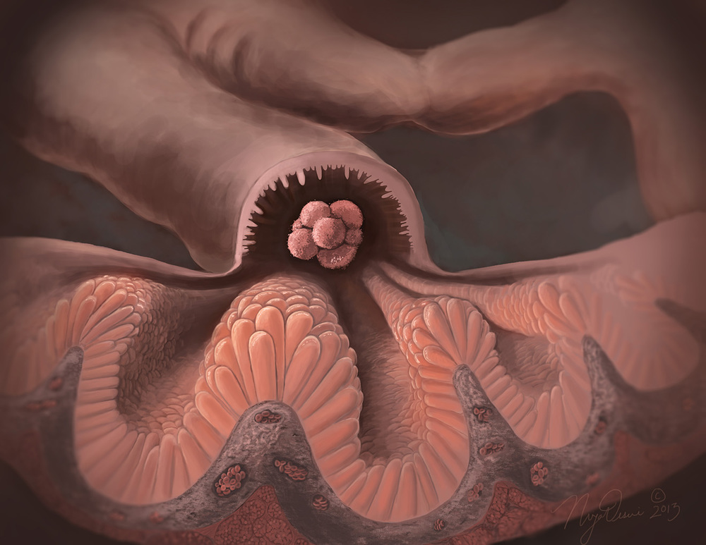 Cellular Landscape on a Fallopian Tube