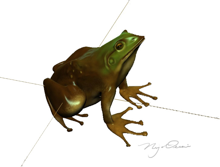 3D Model of a Common Frog