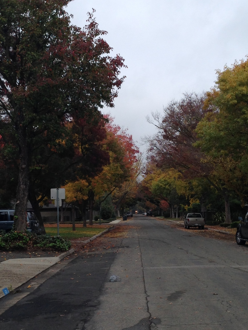 The street outside of my QHHT Session. i love fall!