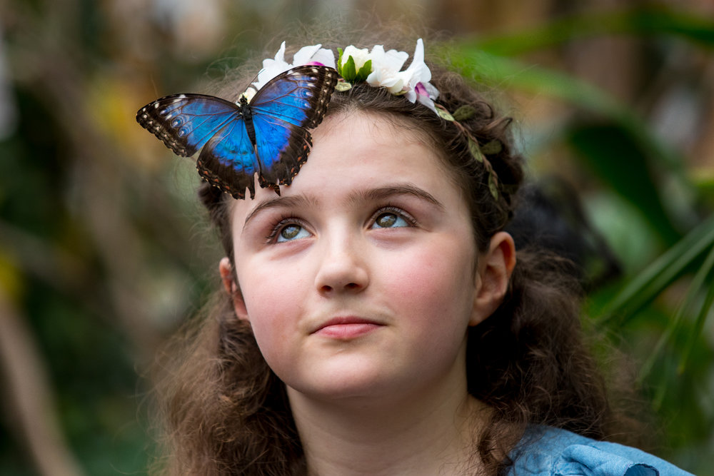 Freya, age 10, lets a butterfly land on her head at the 'Sensational Butterflies' exhibition at the Natural History Museum. March 2018 - London, UK
