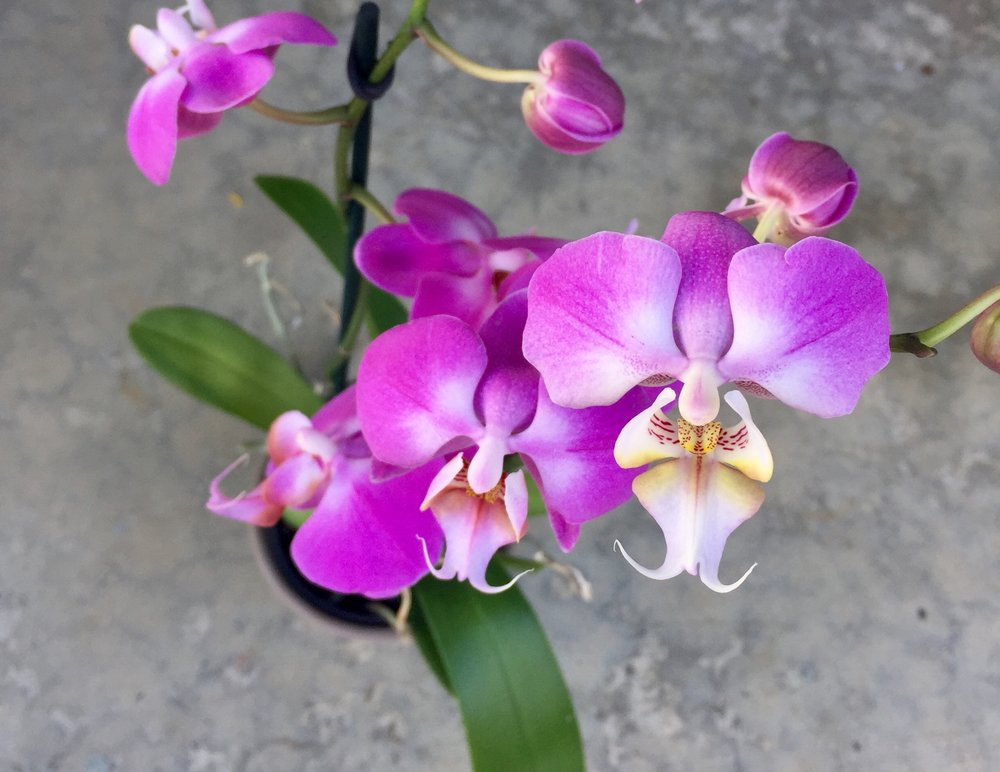 Orchid Planter - $65