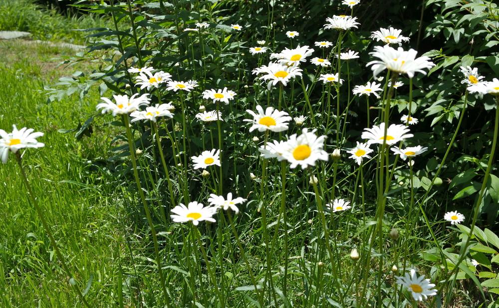 Moms wildflowers