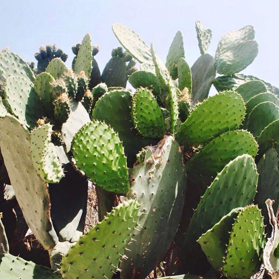 Cactus and Fashion