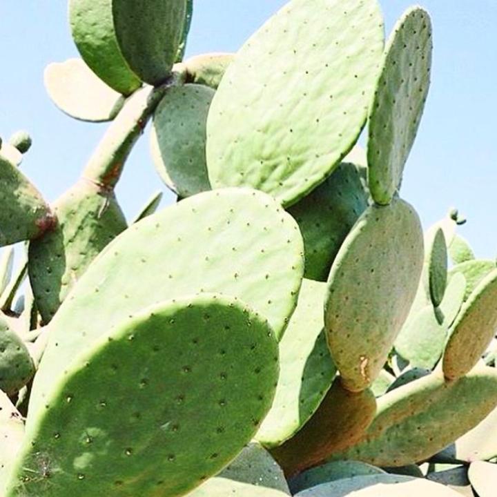Cactus blue sky
