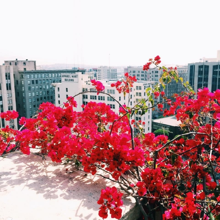 Rooftop at The Ace Hotel Downtown Los Angeles