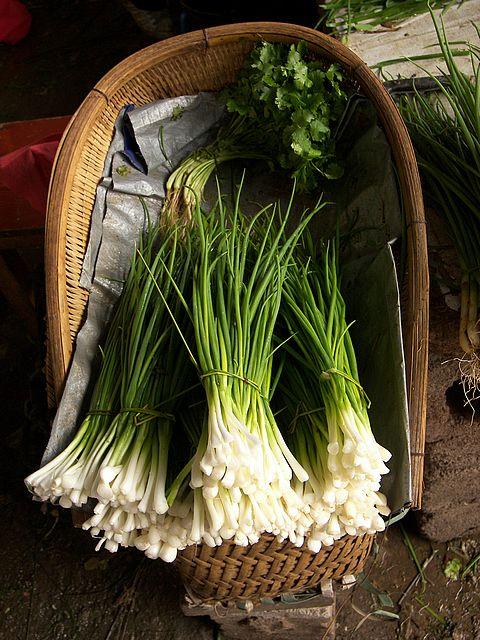 onion-chives-allium-schoenoprasum.jpg