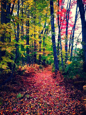 fall woods.jpg