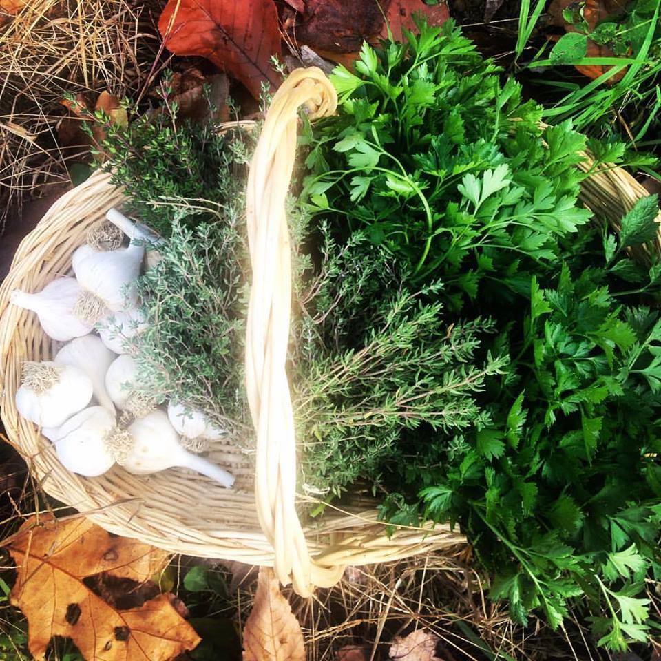 kitchen herbs in basket.jpg