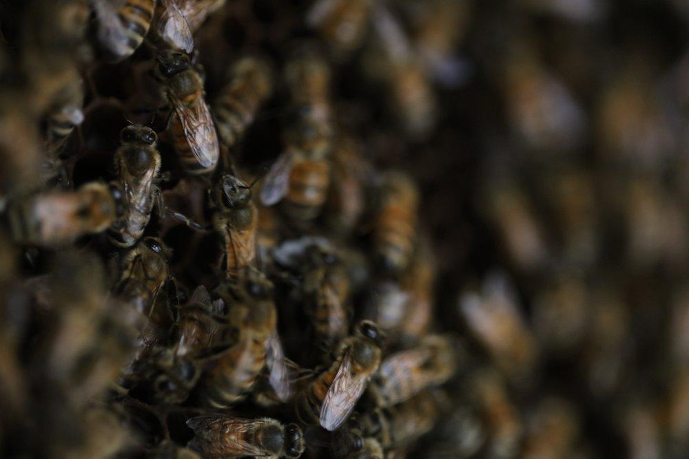 Observation Hive II