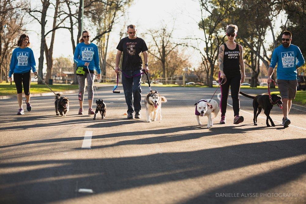 180205_sspca_spca_willam_land_park_doggy_dash_california_danielle_alysse_photography_sacramento_pet_dog_photographer_6_WEB.jpg