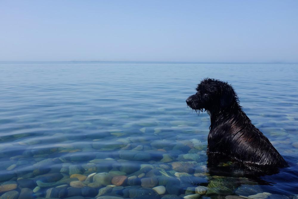 blackdog.jpg