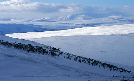 Norsk-Villreinsenter.jpg