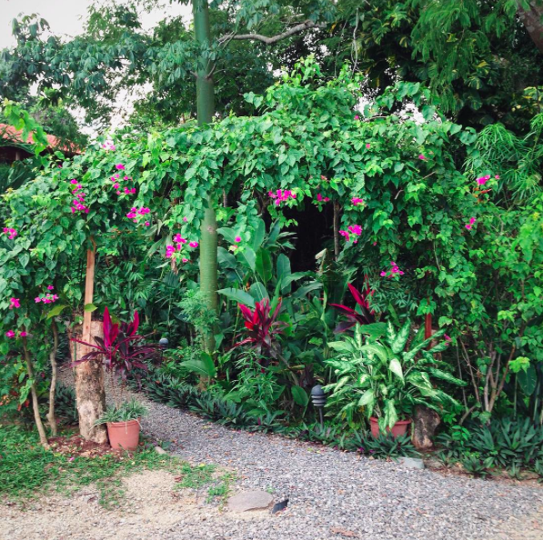 Costa Rica: October | The Herb Diaries
