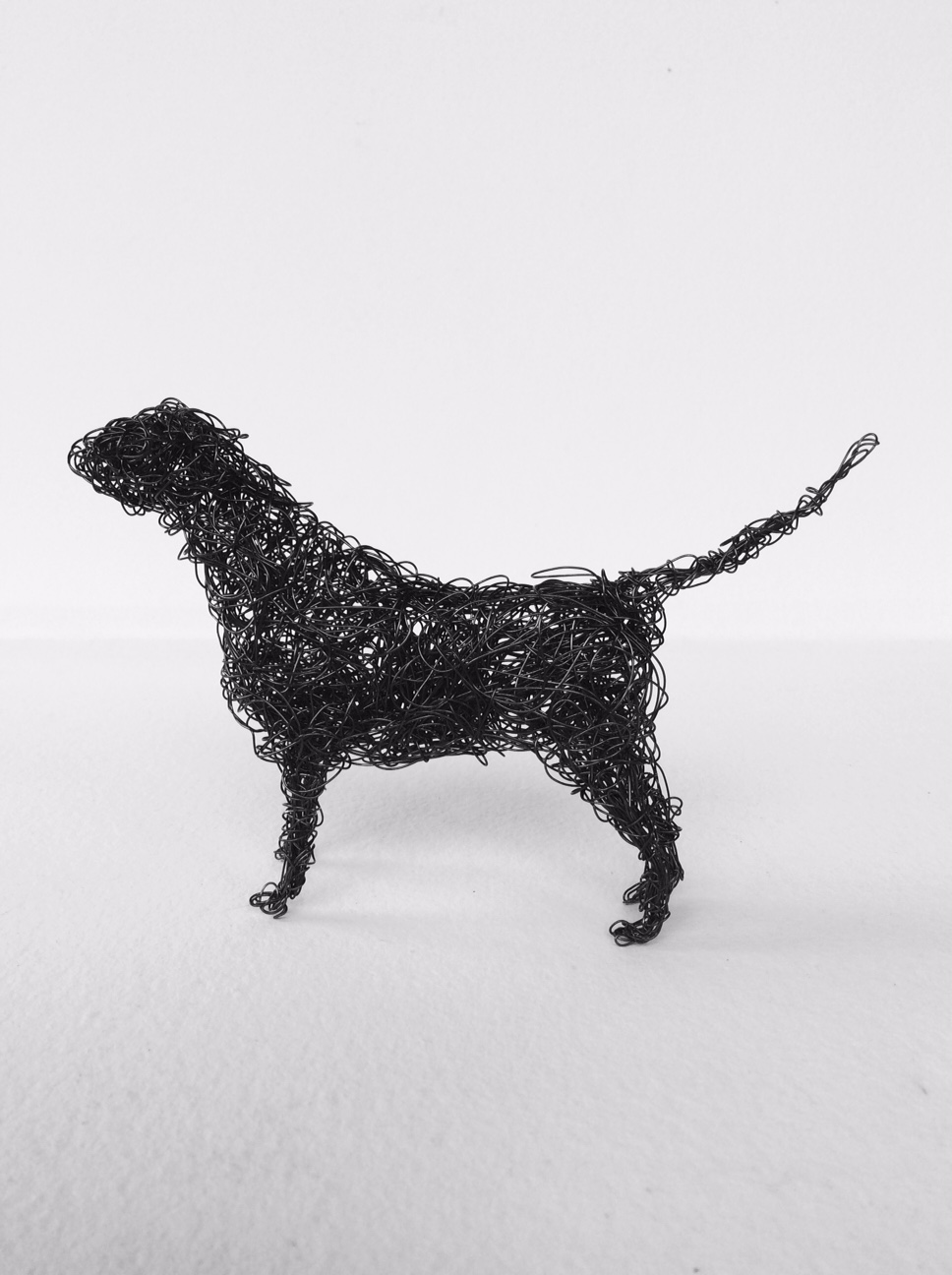 Black wire Labrador