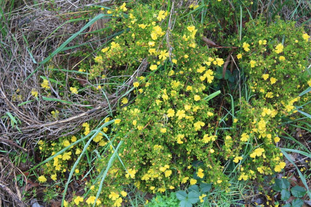Frasers landing wildflowers
