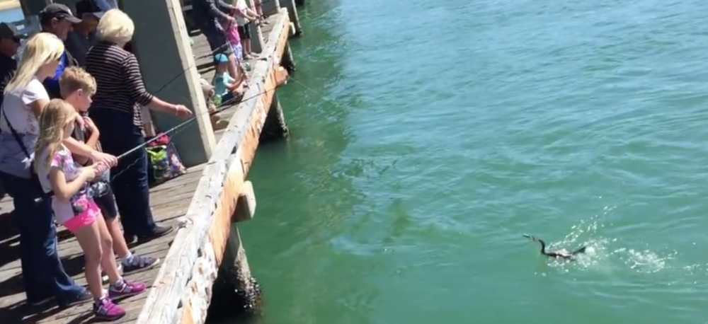 Keep an eye out in the video for this bird that decided to go fishing too...
