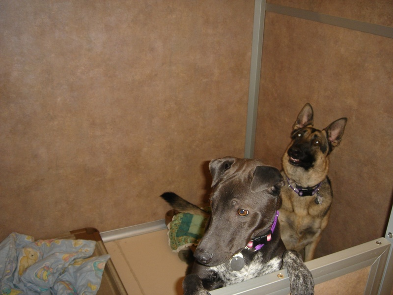 bunkmates - ellie and dally.jpg