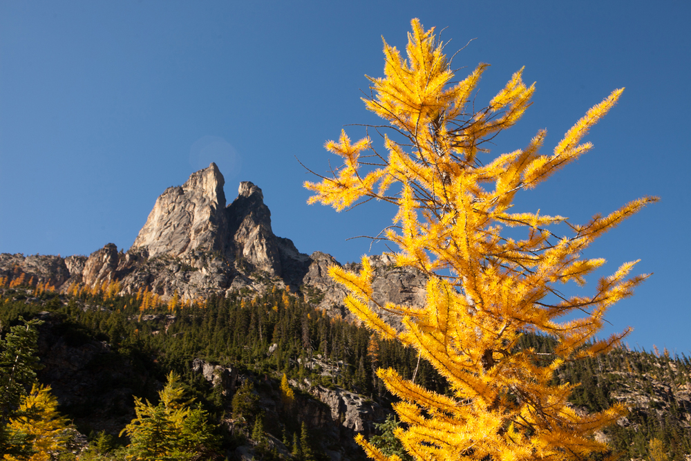 ANW_Larch Trees_20.jpg