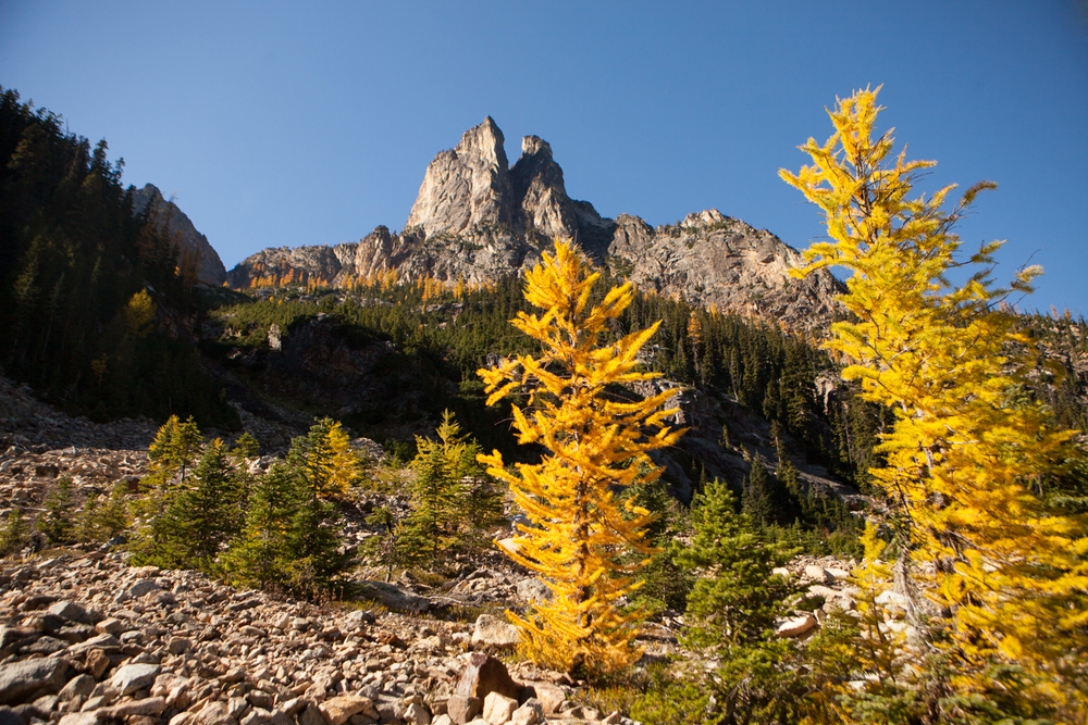 ANW_Larch Trees_Feature.jpg