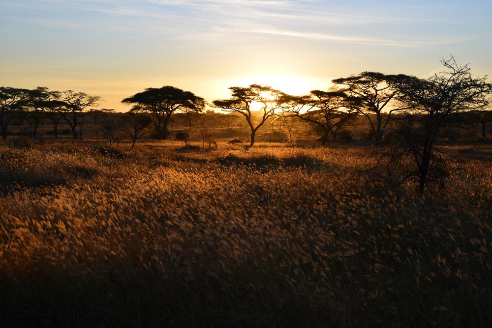 FDB_4-tree-serengeti.jpg