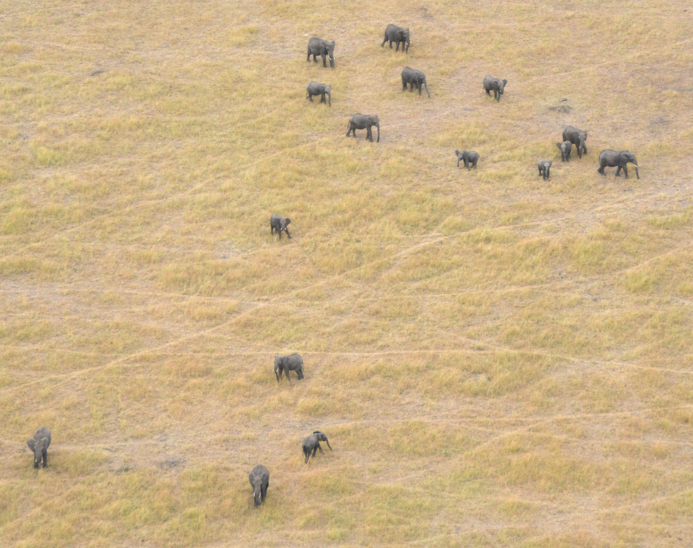 FDB_2d-serengeti-elephants.jpg