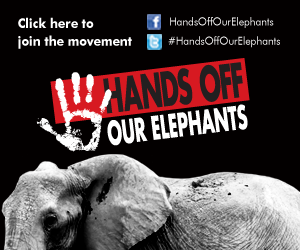 Hands-off-our-elephants.png