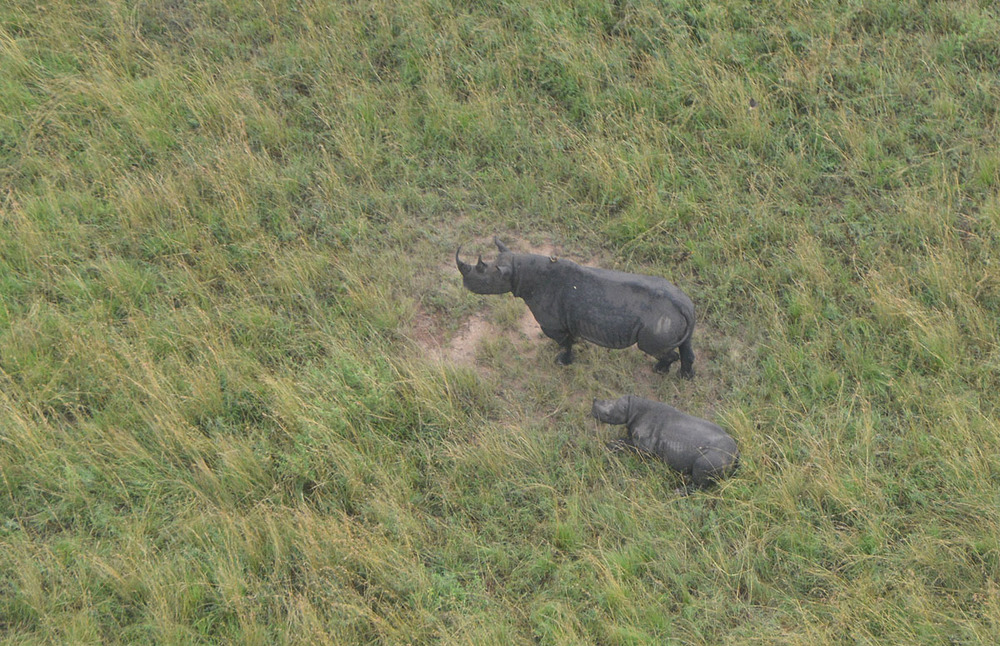 A rhino family viewed from the Serengeti flight.