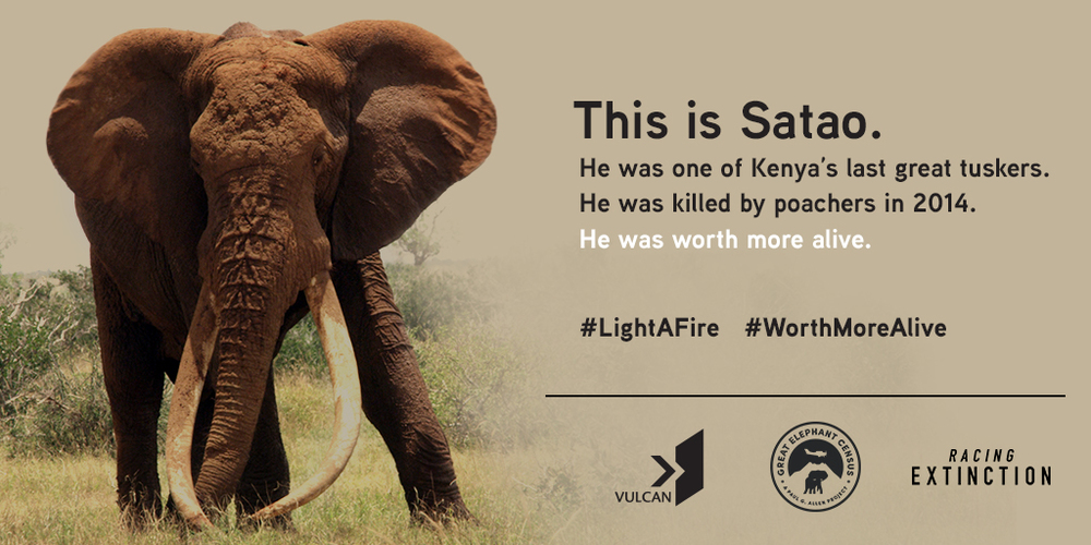 In 2014, one of Kenya's most iconic tuskers, Satao, was discovered in Kenya gunned down and mutilated. It took weeks to positively identify him. He and his brothers and sisters remind us what is at stake.