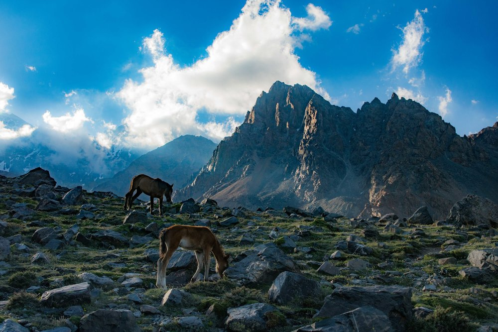 Horses Grazing in the Cordón de Plata, Argentina - 11,898' (3,627m)