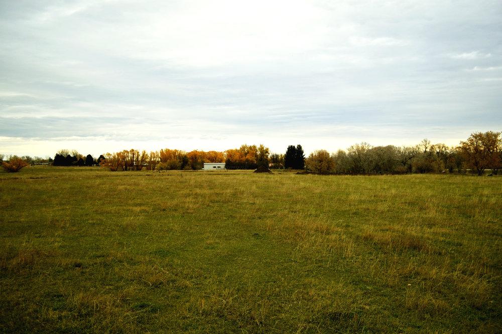 longhorn-5.jpg