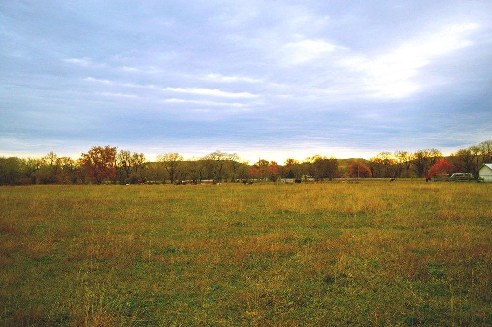 longhorn-1.jpg