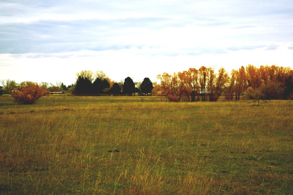 longhorn-3.jpg