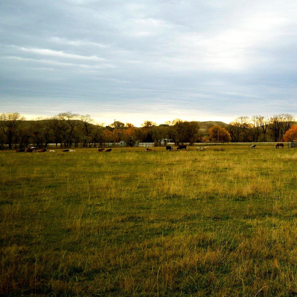 longhorn-4.jpg