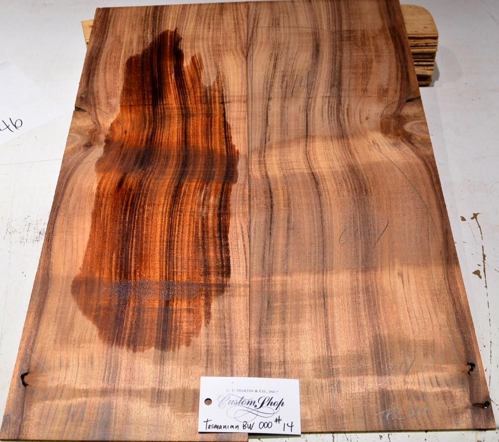 Tasmanian Blackwood #14